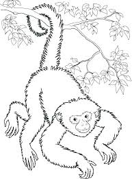 Spider Monkey Coloring Pages Hanging Spider Monkey Coloring Page