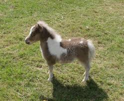 baby mini horse. Fine Horse In Baby Mini Horse H