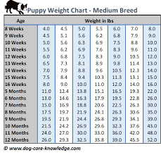 Puppy Weight Chart This Is How Big Your Dog Will Be Dog