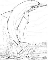Small Picture Realistic Dolphin Coloring Pages for Adults Enjoy Coloring