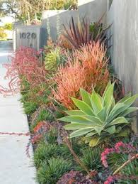modern drought tolerant garden great gardens u0026 ideas looove the color and drought tolerant is perfect for austin yards desert garden ideas63