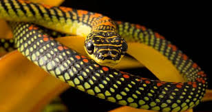 cute snake wallpaper.  Cute Labels Animals Photography  In Cute Snake Wallpaper