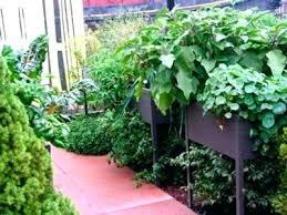 florida vegetable gardening. Container Vegetable Garden Gardening North Florida