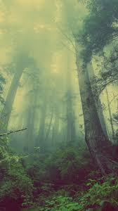 Green Forest Mist Fog iPhone 6+ HD ...