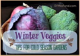 tips for growing your winter vegetable garden