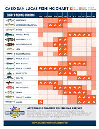 Tuna Fish Size Chart Cabo Fishing Season Calendar The Tuna Tower