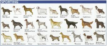 dog breed size chart the 7 dog breed groups explained american kennel club