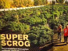 sungrower magazine