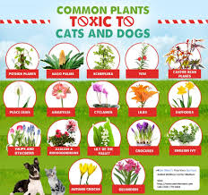 toxic plants for dogs cats
