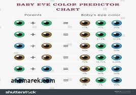 Eye Color Genetics Chart 76 Judicious Hair Color Prediction Chart