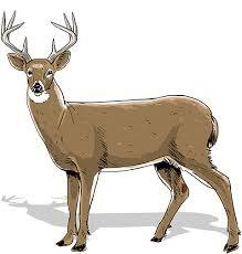 Deer Antler Age Chart How To Age Bucks Realtree Camo