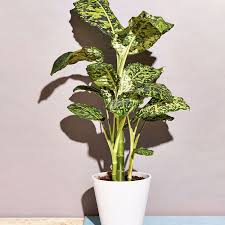 how to keep these 15 low light plants alive