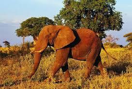 Класс Млекопитающие Звери mam a млекопитающие звери  Класс Млекопитающие или Звери mam a