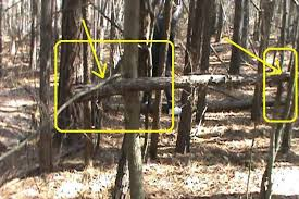 real sightings of the easter bunny. Interesting Bunny With Real Sightings Of The Easter Bunny S