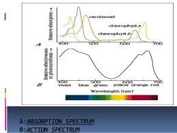 Action Spectrum Action Spectrum