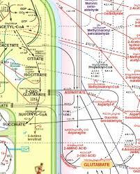 Metabolic Pathways Chart