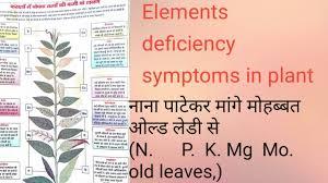 Plant Nutrient Deficiency Chart Nutrients Deficiency Symptoms In Plant