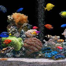 Saltwater fish tanks ...