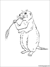 Small Picture Prairie dog coloring page Coloring pages