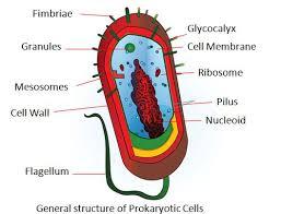 Prokaryotic And Eukaryotic Cells Chart Difference Between Prokaryotic Cells And Eukaryotic Cells