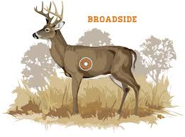 broadside shots occur when either side of a deer is perpendicular to the bowhunter this