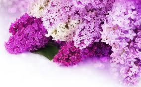 Purple Flowers Backgrounds Purple Flower Backgrounds Wallpapertag