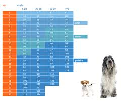 Dog To Human Years Conversion Chart How Old Is Your Dog In People Years