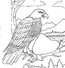 Eagle Soaring Drawing At Getdrawingscom Free For Personal Use