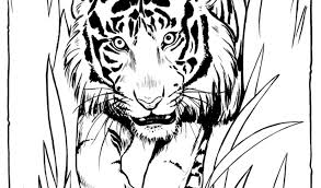 Small Picture Get This Tiger Coloring Pages to Print for Free 37011