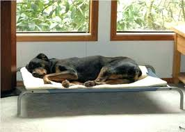 Indoor Outdoor Elevated Dog Bed Pipe Dreams Pet – spacesapp.co