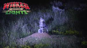 Best Coyote Hunting Light Wicked Lights Night Hunting Fox With Predator Pursuit