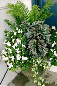 10 Plants For Yearround Containers  Fine GardeningContainer Garden Shade Plants