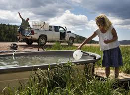Free Spring State To Cap Free Spring Water Available In Teller County For
