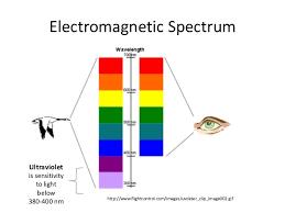Evolution Of Ultraviolet Vision In Birds