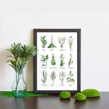 Herb And Spice Wall Chart Kitchen Art Decoration Botanical Chart Wall Art Canvas Poster Prints Herbs And Spices Painting Picture Herbarium Home Wall Decor