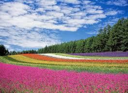 types of flowers 170 flower names