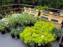 best garden plants. Plants For Terrace Herb Garden Best E