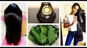 how to use guava leaves for hair growth stop hair loss get rid of dandruff beautyklove you