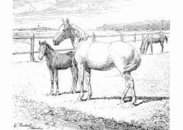 Kleurplaat Paard Met Veulen Elegant Tekening Paard Veulen Archidev