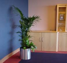 office plant displays. Aluminium Plant Display With Kentia Palm In Birmingham Office Displays F