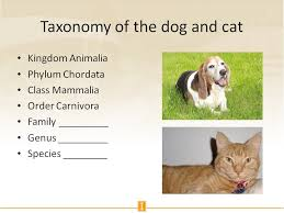 Dog Scientific Classification Chart Taxonomy Of The Dog And Cat