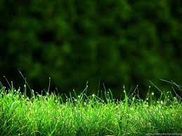 Go Green Wallpaper Hd posted by ...