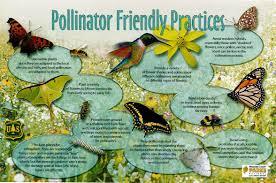 Small Picture pollinators Garden Snips