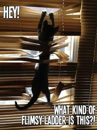 Hey! What kind of flimsy ladder is this?! Kitty - Share cute at via Relatably.com