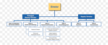 Diagram Of Organizational Chart Organizational Chart Diagram National Institute Of Justice