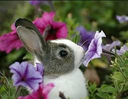 Image result for flower smelling