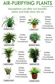 best house plants for clean air and better health health