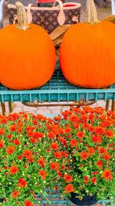 Autumn iPhone Wallpaper Backgrounds ...