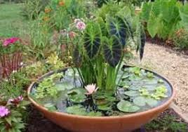 container water garden. Modren Garden All Kinds Of Bowls Or Pots Can Be Used For Water Gardening In Containers  They Made With About Anything U2013 Large Glass Bowls Plastic Ceramic  With Container Water Garden I
