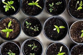 organic herb garden